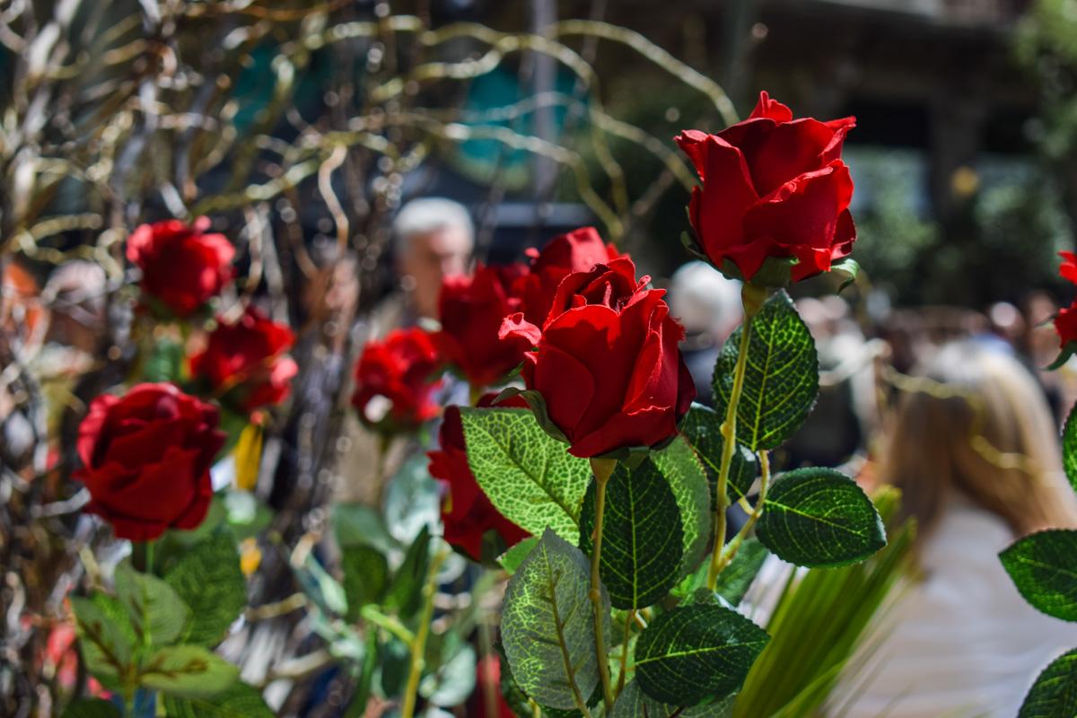 Ruža za ljubav, a knjiga zauvek
