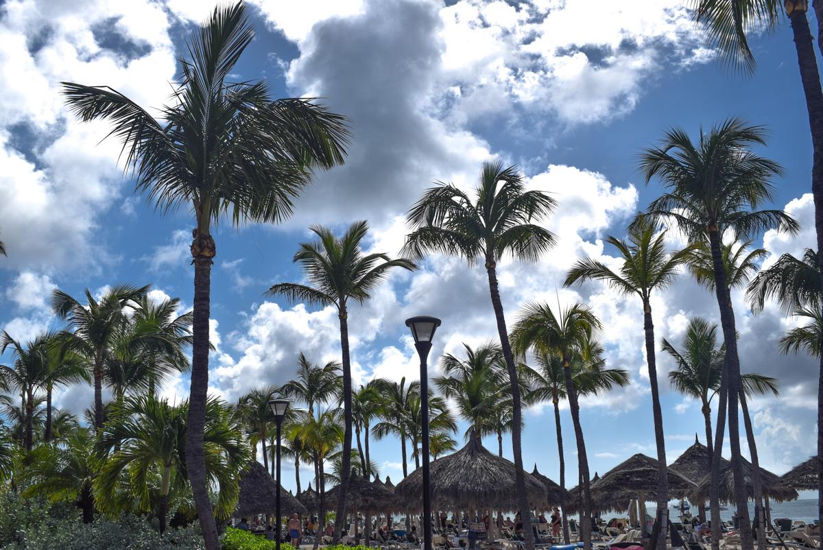Plaža Palm