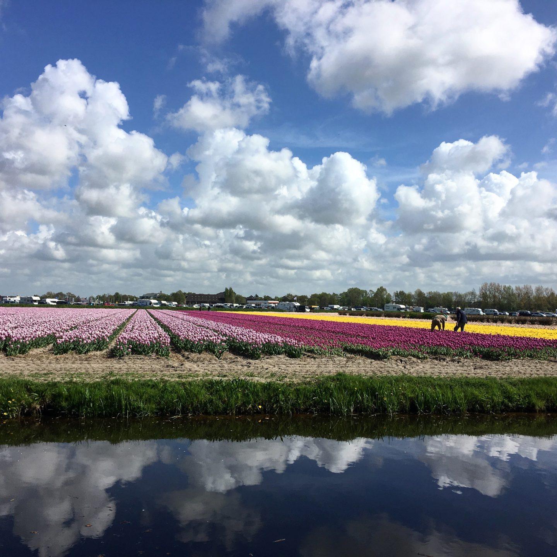 Polja lala, blago Holandije koje ostavlja bez daha